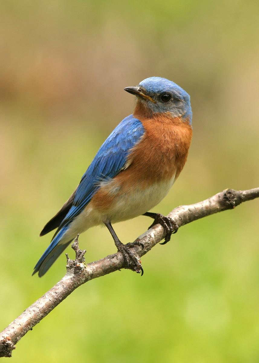 birds | Lake County Nature