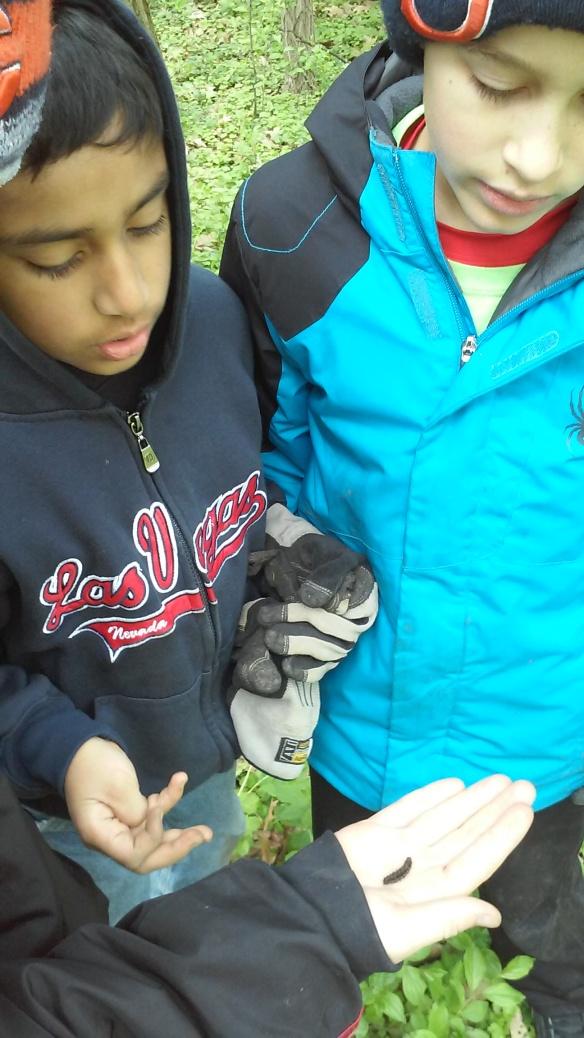 students&caterpillar