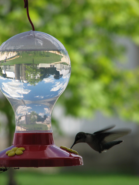 hummingbirds 003