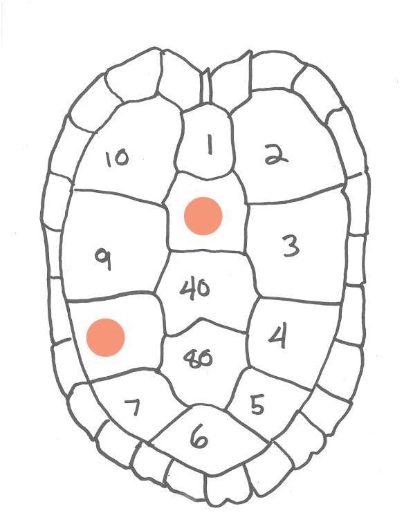 hatchling-marking