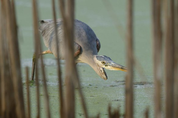 gbh-flickr-ph