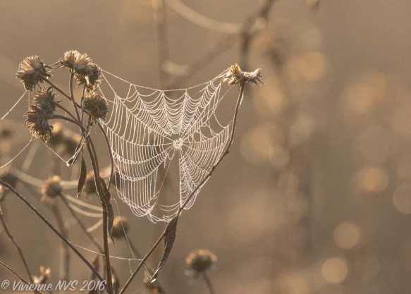 prairie-in-autumn-flickr-vivienne-nvs