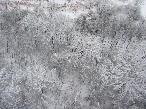 Aerial view of a snowy woodland. Photo © Lake County Forest Preserves.