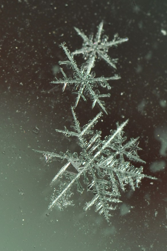 snowflake-copyright-dick-todd