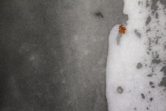 An oak leaf rests on the frozen surface of Indian Creek. Photo © Lake County Forest Preserves.