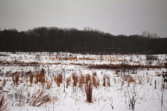 A snow-swept field at Heron Creek on January 22, 2019. Photo © Lake County Forest Preserves.