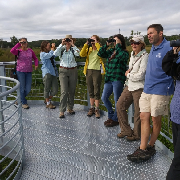 Birdwatching volunteers train atop the new observation deck at Spring Bluff in Winthrop Harbor. Photo © Lake County Forest Preserves.