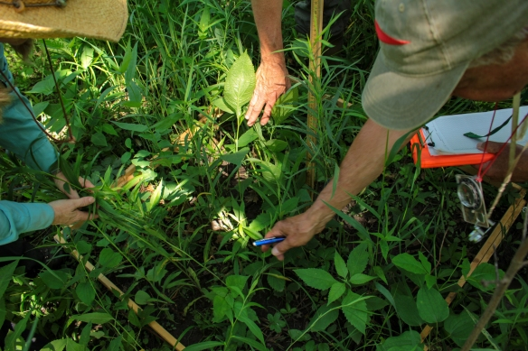 Vegetation monitoring is a group effort full of friendly debate and discussion. Photo © Lake County Forest Preserves.