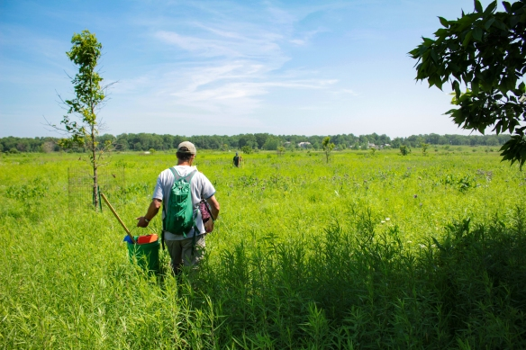 The Plant Team heads back to the trail. Photo © Lake County Forest Preserves.