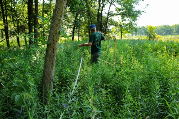 The Plant Team on the move to the next plot, ten meters away. Photo © Lake County Forest Preserves.