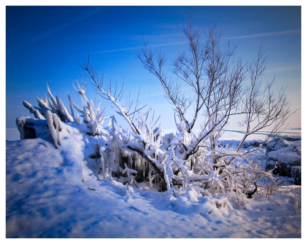 """""""Frozen Tree."""" Photo © Michelle Wendling."""