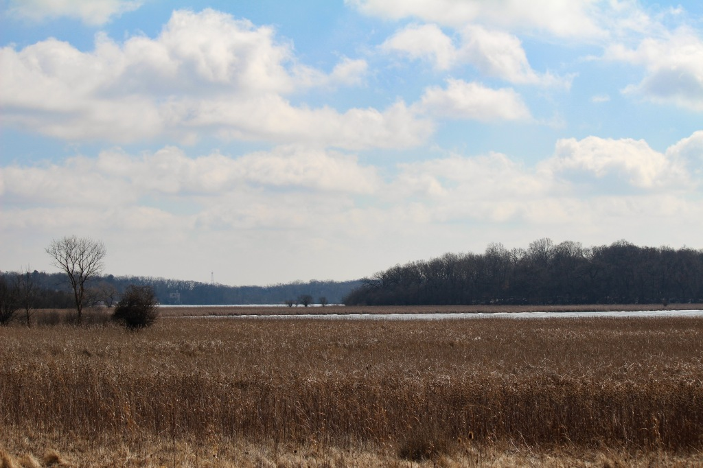 Another view of Sun Lake from an overlook on the preserve's west side. Photo © Lake County Forest Preserves.