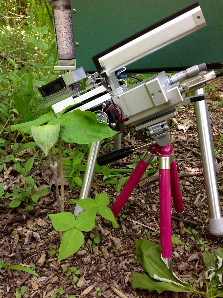 A meter measures the rate of photosynthesis of a Jack-in-the-pulpit individual. Photo © Lake County Forest Preserves.