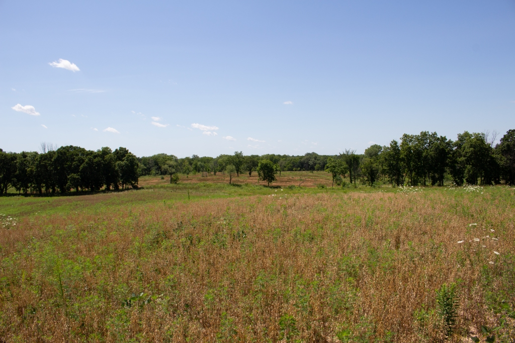 A portion of the research project area at Grant Woods. Photo © Lake County Forest Preserves.