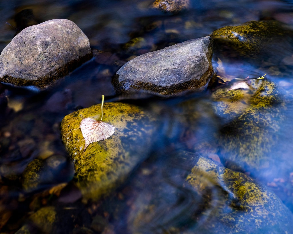 """August creek, early fallen leaf."" Photo © Sean Anderson."