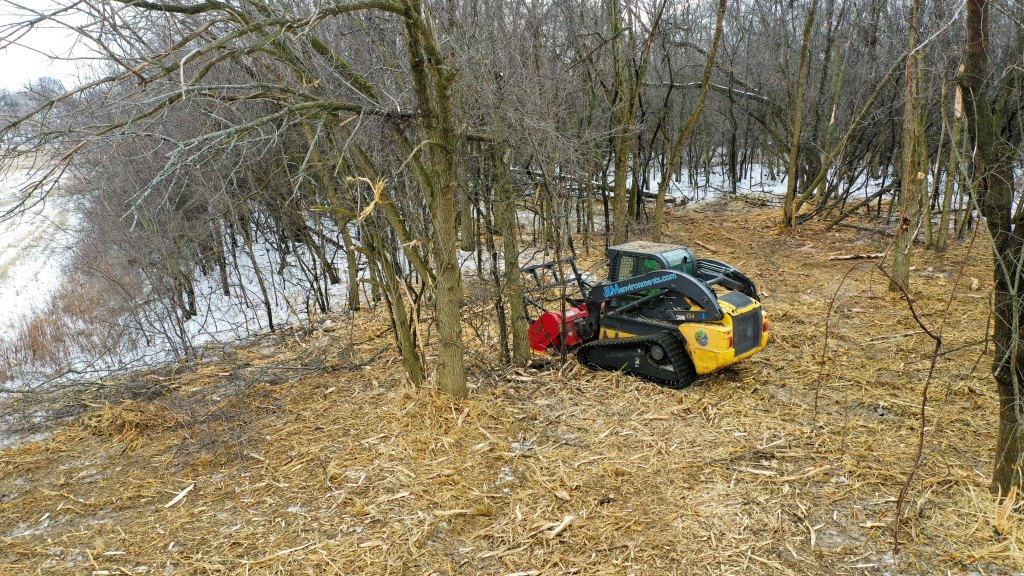 A skid steer with a Fecon mower attachment shreds buckthorn and other woody invasive species in a thick hedgerow of invasive species. Photo © Mike Borkowski.