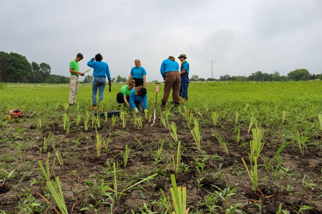 About 1,000 wetland plugs were planted on the morning of July 13, 2021. Photo © Lake County Forest Preserves.