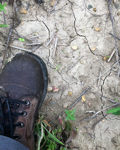 The author's boot atop a drought-parched patch of soil at Grant Woods in Ingleside. Photo © Lake County Forest Preserves.